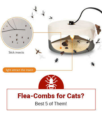 Flea-Combs for Cats?