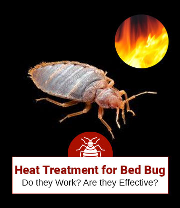 Heat Treatment to Kill Bed Bugs