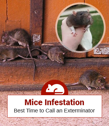 How Much Is An Exterminator For Mice