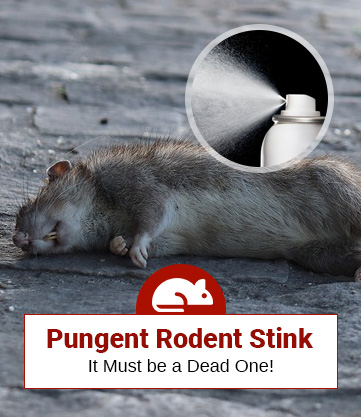 How To Get Rid of The Dead Rat Or Mouse Smell