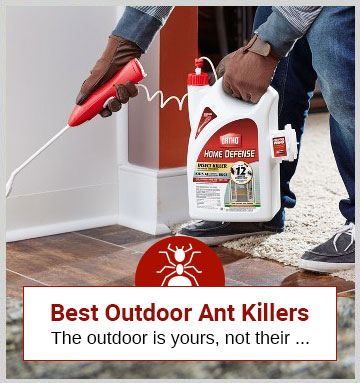 Ant Product