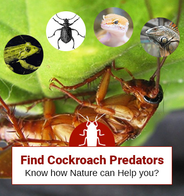 Discover Some Cockroach Predators