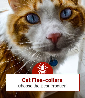 Cat Flea-collars: Choose the Best Product?