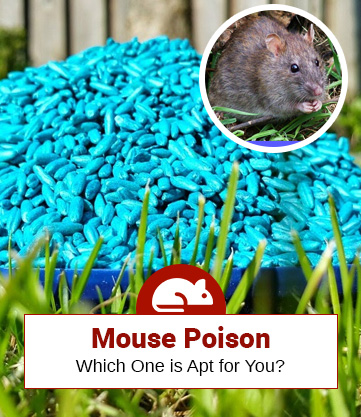 Check Out The Top 5 Mouse Poisons