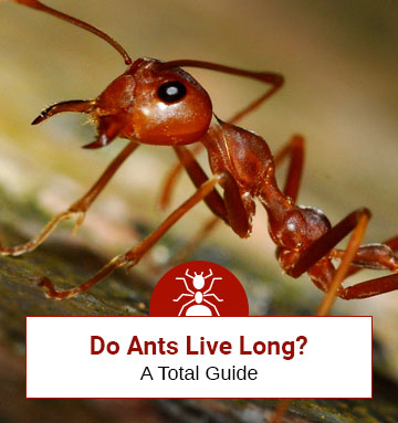 Do Ants Have a Longer Life