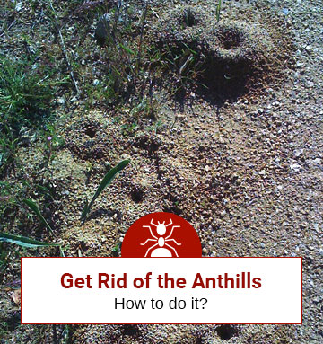 Get Rid of Anthills Now!