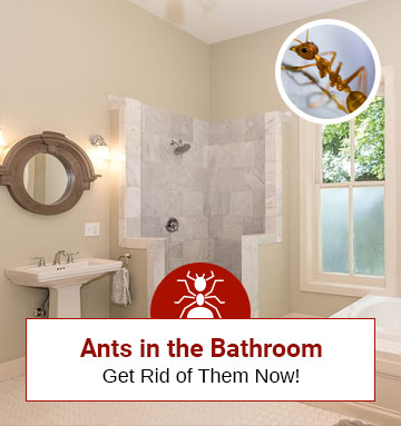 How to Get Rid of Ants in Your Bathroom