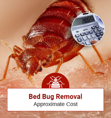 Approximate Cost of Bed Bug Treatment