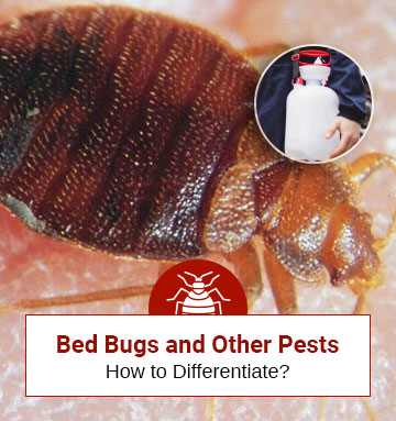Bed Bugs And Other Pests (A Thorough Comparative Guide)