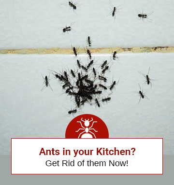 Best 5 Ant Killers For The Kitchen
