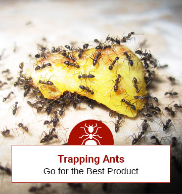 Best 5 Ant-Trapping Products
