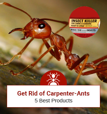 Best 5 Carpenter Ant Killers and Their Assessments