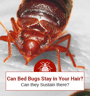 Can You Be Sick Because Of Bed Bugs