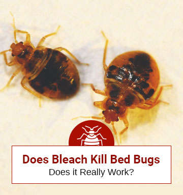 Does Bleach Destroy Bed Bugs?