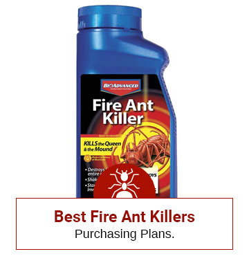 Get Rid of The Fire Ants Now!