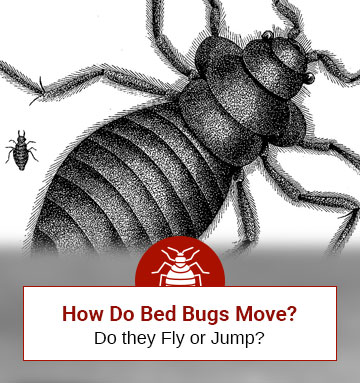 How Do Bed Bugs Move? Find It Out Here!