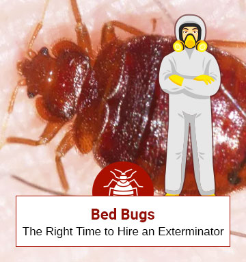 How Much Do Bed Bug Professionals Charge?