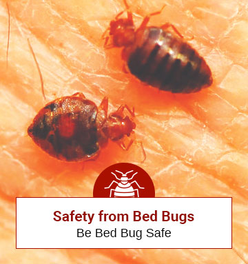Some Useful Safety Tips Against Bed Bugs! (Be Bed Bug Safe)