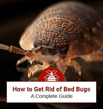 Tips On How To Remove Bed Bugs (A Comprehensive Bed Bug Removal Guide)