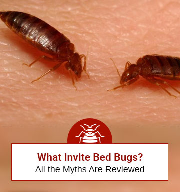 What Invites Bed Bugs? (Traditional Myths Exposed)