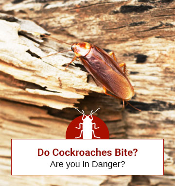 Do Cockroaches Bite