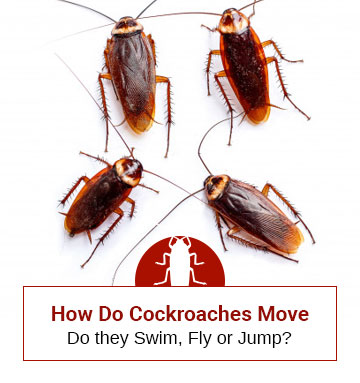 How Cockroaches Move From One Place To Other