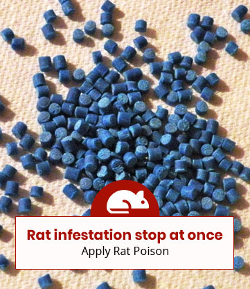 Best rat poisons in the market: Check out our recommended 4 products