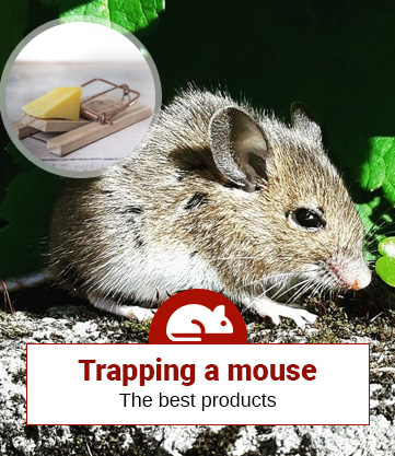 Trapping a mouse